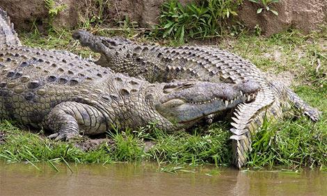 Psematismenos crocodile park