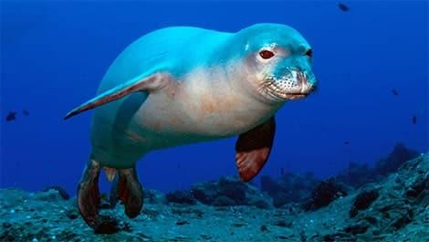 Sea caves birthing habitat for endangered Mediterannean Monk Seal