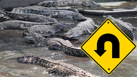 crocodile park u-turn